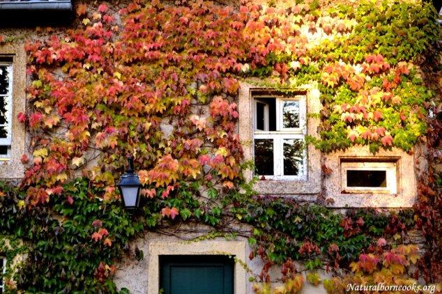 autunno_foglie_finestre