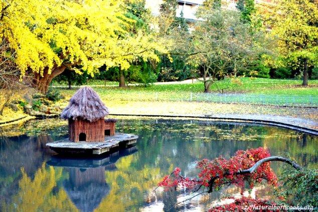 autunno_stagno
