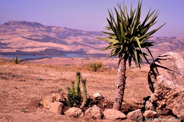 entroterra_sicilia_panorama_piante_grasse