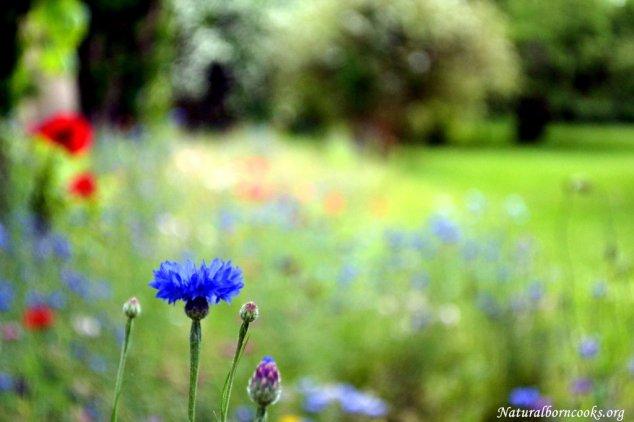 fiori_prato