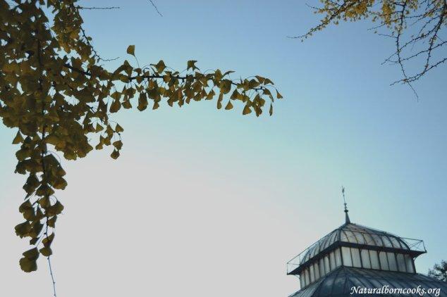 pagoda_ginkgo