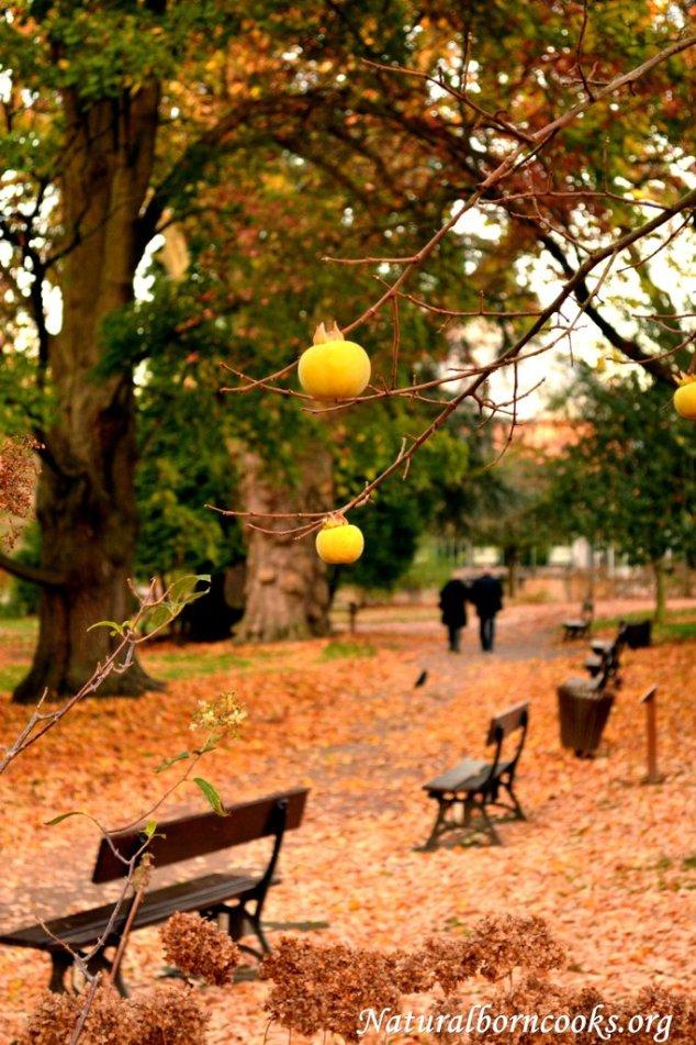 viale_autunno_giallo