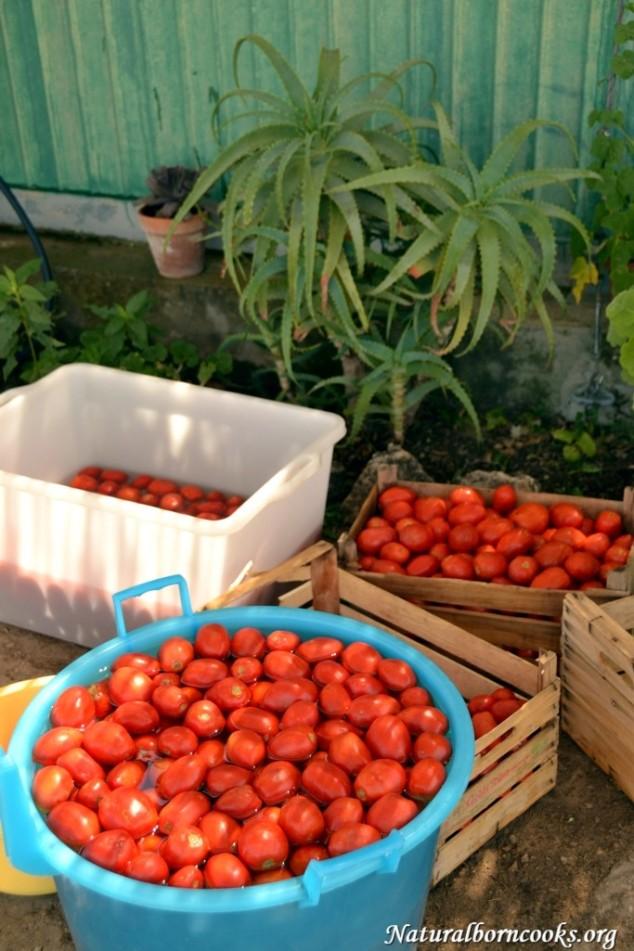 pomodori_conserve_lavaggio