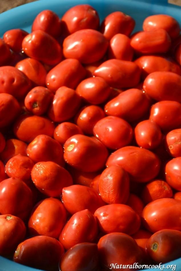 pomodori_conserve_lavaggio_vasche