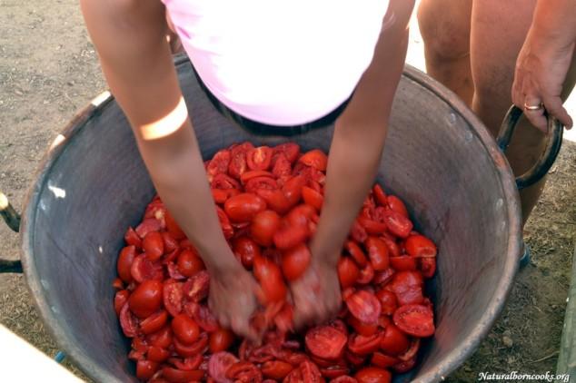 pomodori_conserve_spremitura