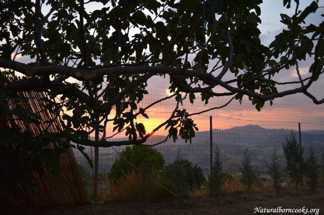 entroterra_fico_tramonto