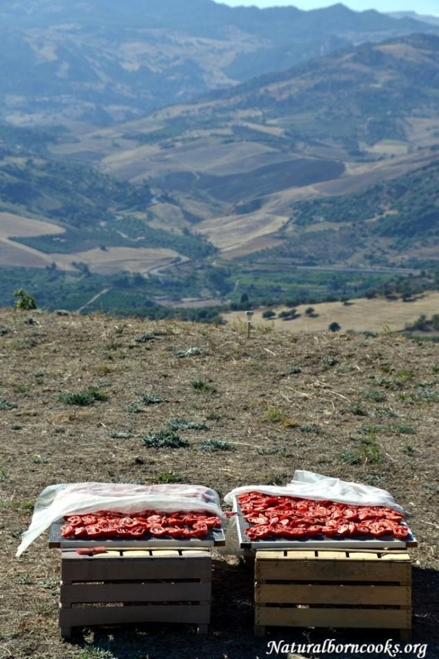 pomodori_secchi_sole_entroterra