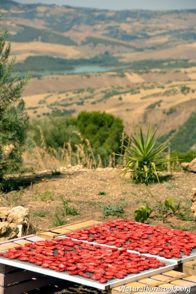 pomodori_secchi_sole_sicilia_entroterra
