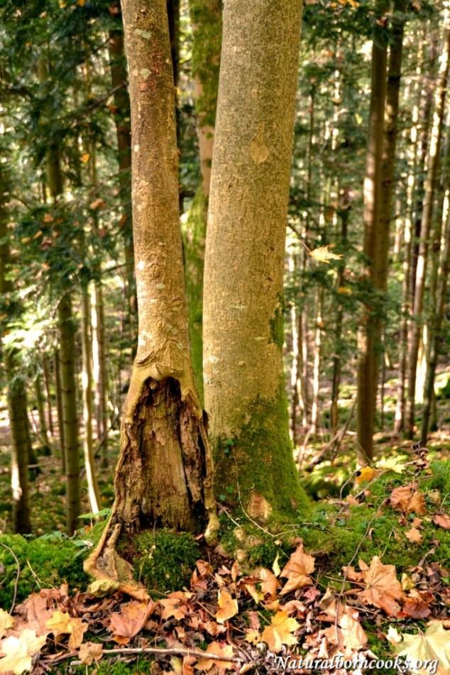 foglie_autunno_bosco