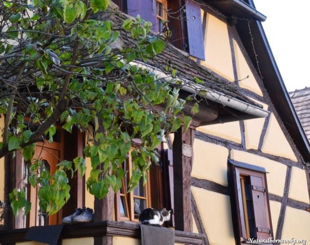 village_alsace_route_des_vins