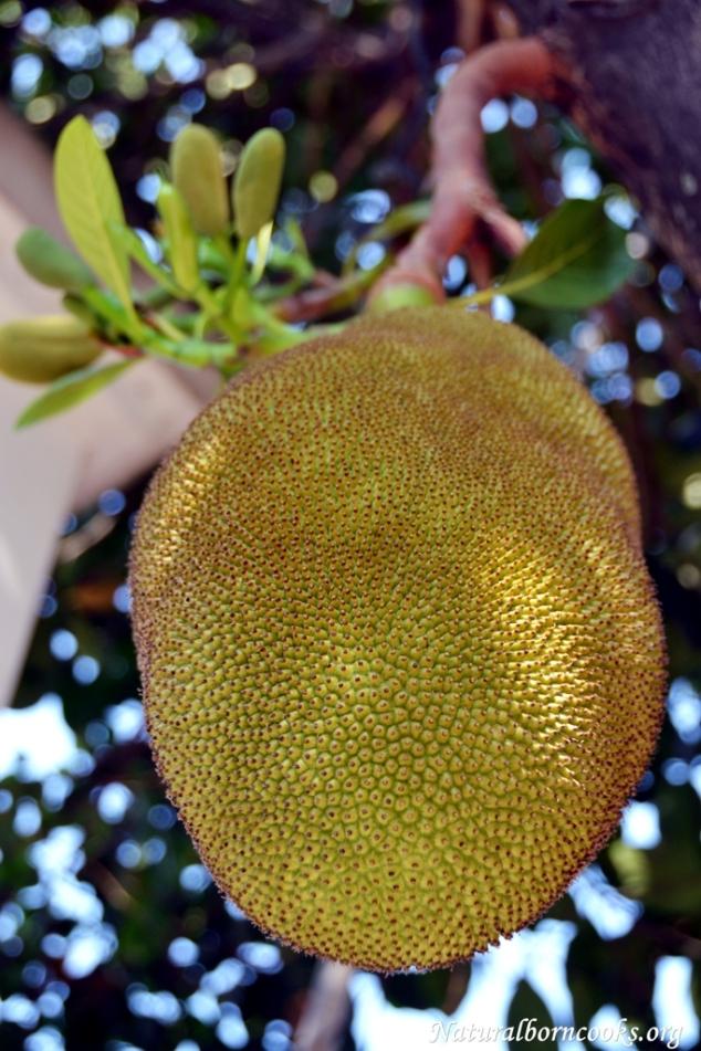 chiang_mai_jack_fruit