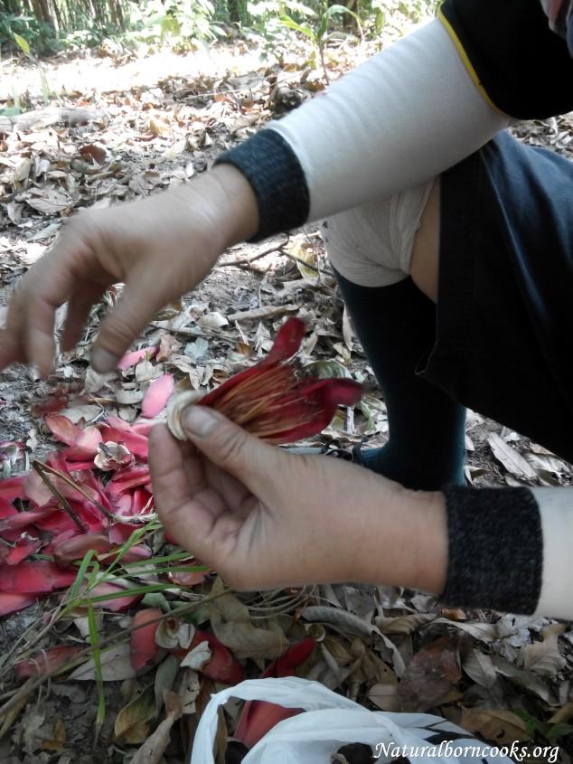 trekking_chiang_dao_jungle