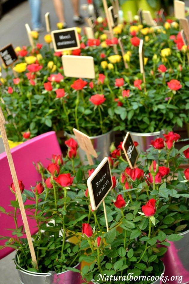 strasbourg_fleurs